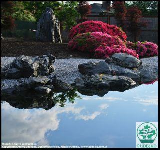Kwitnące Azalie Oczko Wodne Ogród Pisarzowice