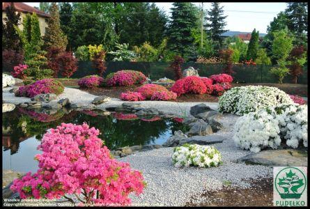 Ogrod-japonski-Pisarzowice-azalie-japonskie (Kopiowanie)