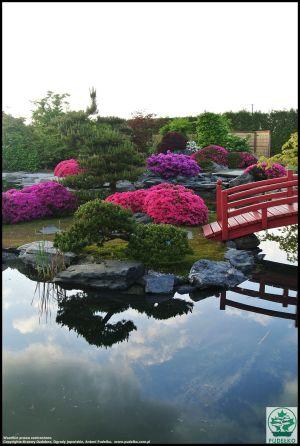 Kwitnące Azalie Ogród Japonski Pisarzowice Maj 1