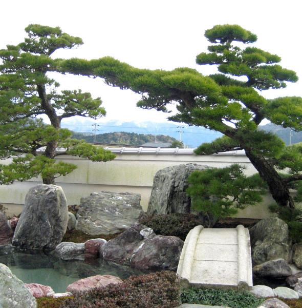 bonsai ogrodowy