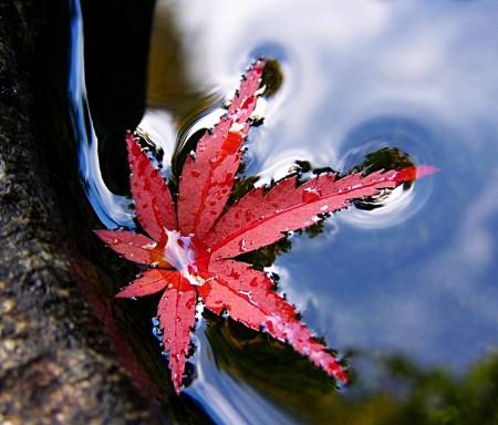 Klony palmowe – delikatna elegancja
