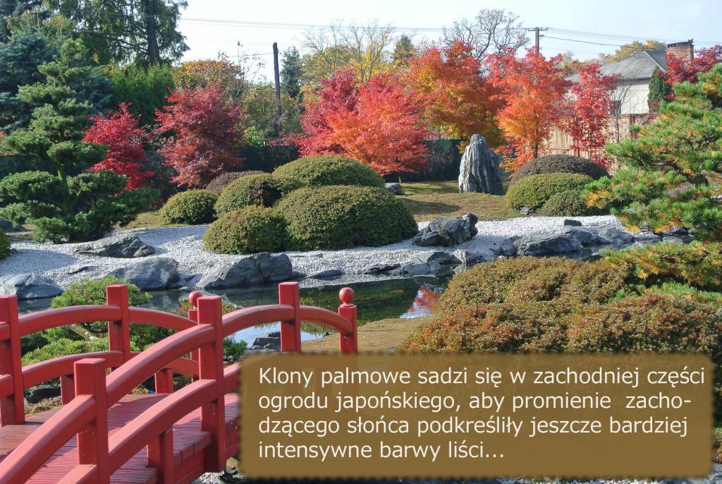 ogrod_japonski_pisarzowice_klony_jesien1